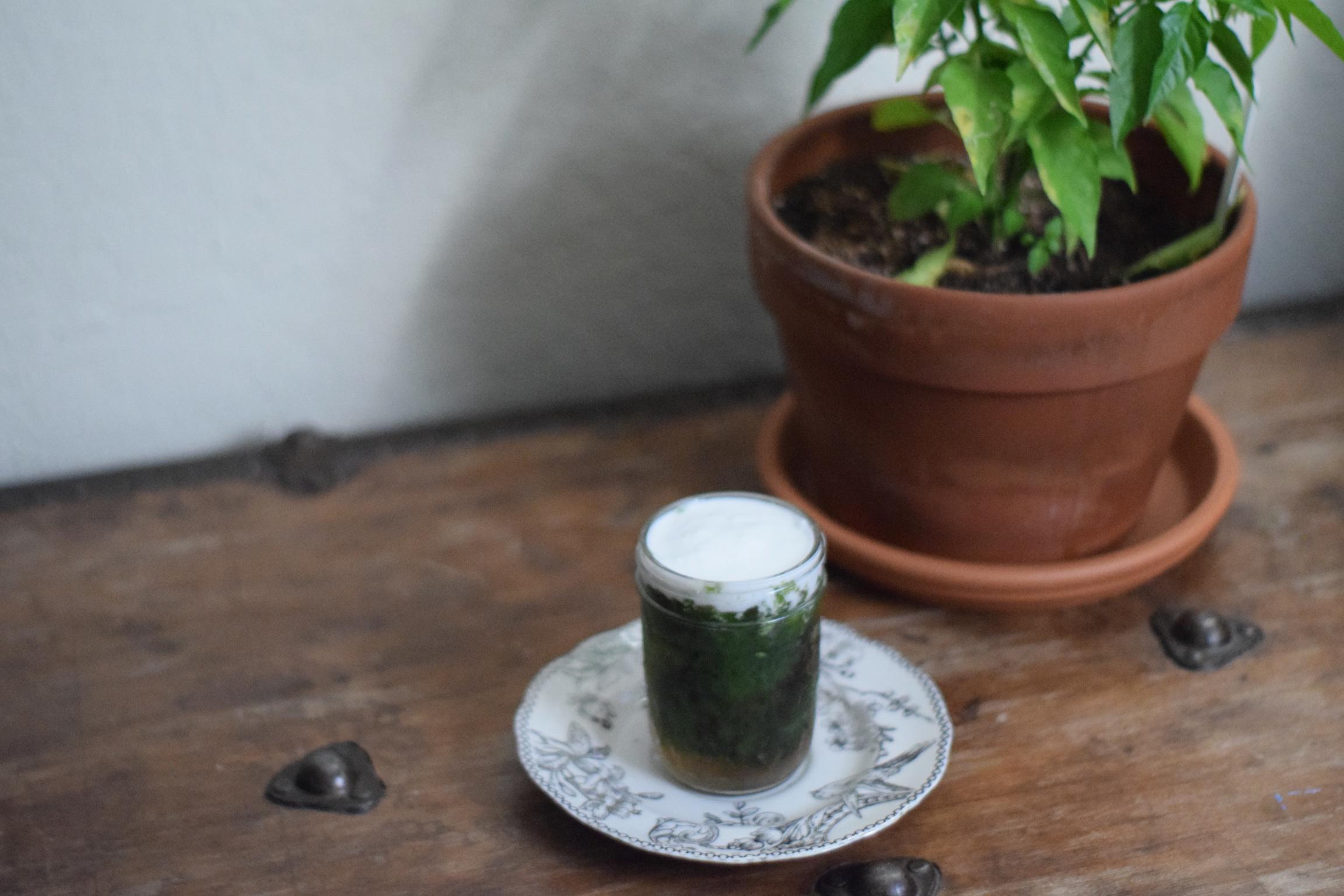 Green grass jelly recipe